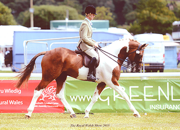 the-royal-welsh-show-2015
